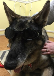 Animal Pet Laser Therapy